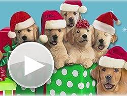 Caroling Canines