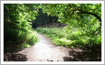 Birnam Wood Path