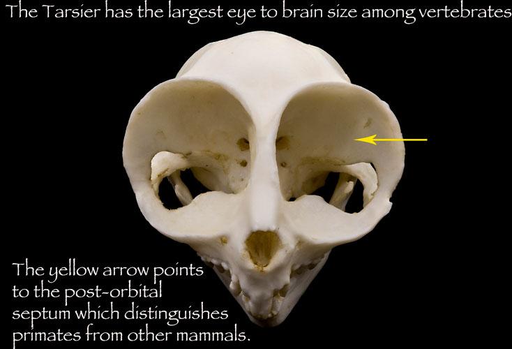 Evolution's Witness: How Eyes Evolved: 9780195369748 ...