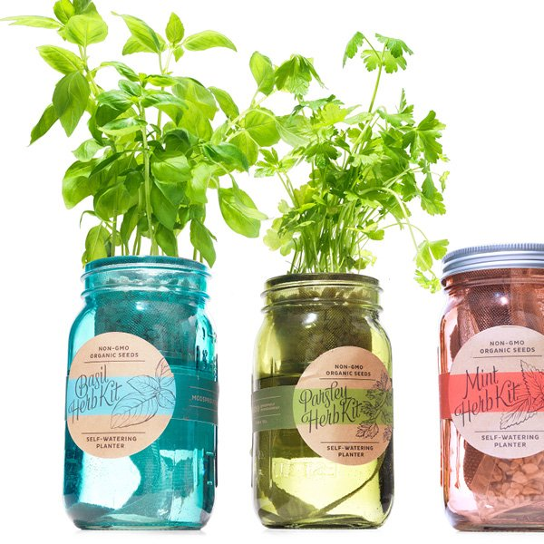 Kitchen Herb Kit