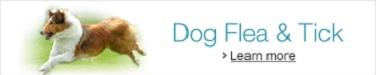Dog Flea and Tick