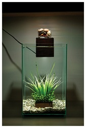 Filter Accessories : Amazon.com: Fluval Chi Aquarium Kit, 5-Gallon