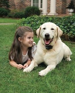 pet safe fence instruction manual
