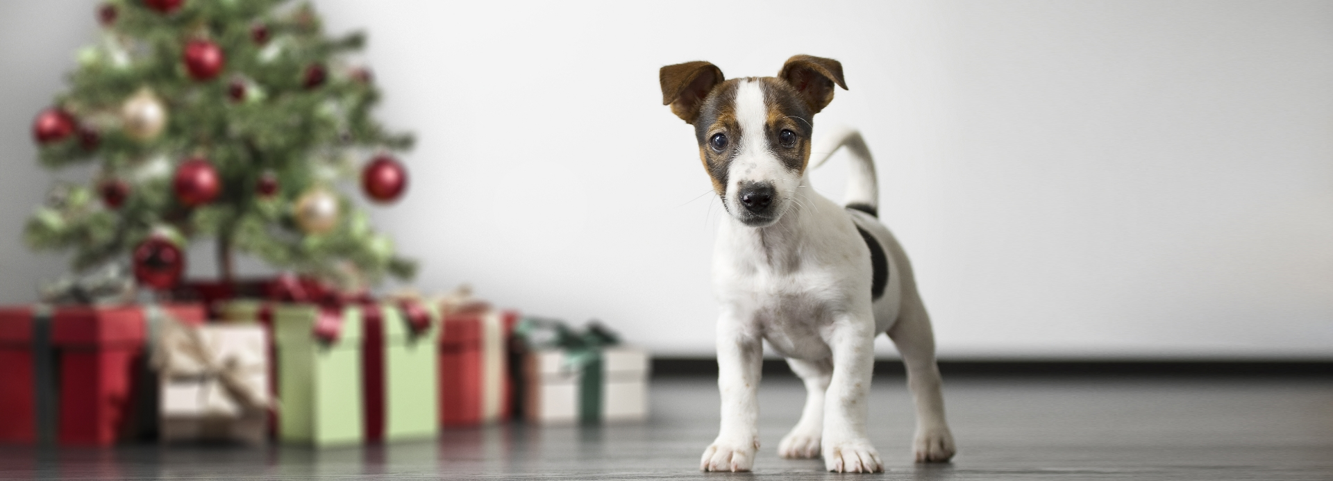 Pets Holiday Gift Guide