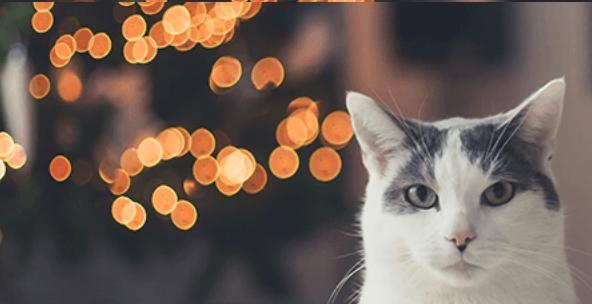 Celebrate your Cat