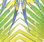 Sunburst Palm