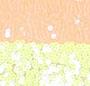 Limeade/Orange