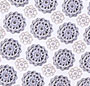 Kaleidoscope Foulard Combo