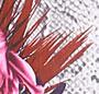 Floral Snakeskin Print