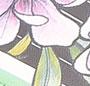 Pink Magnolia Stripe