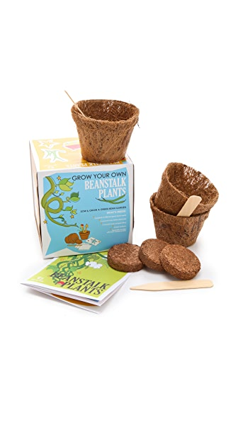 Gift Boutique Sow & Grow Beanstalk Plants