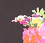 Black/Jazzy Flower