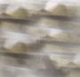 Grey Tortoise/Grey Gradient
