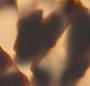 Camel Tortoise/Gold Mirror