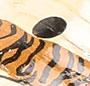 Tiger Dot
