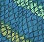 Blue Coral Multi