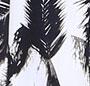 Polynesian Palm