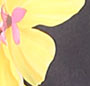 Pink/Yellow Multi