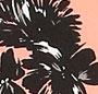 Woodrose