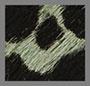 龙舌兰豹纹