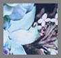 Winter 花卉印花