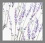 薰衣草印花