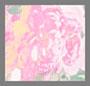 象牙白玫瑰花卉