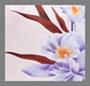 淡紫色/兰花紫