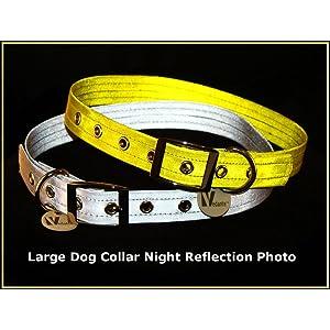 reflective, dog collar, metallic gold, metallic silver