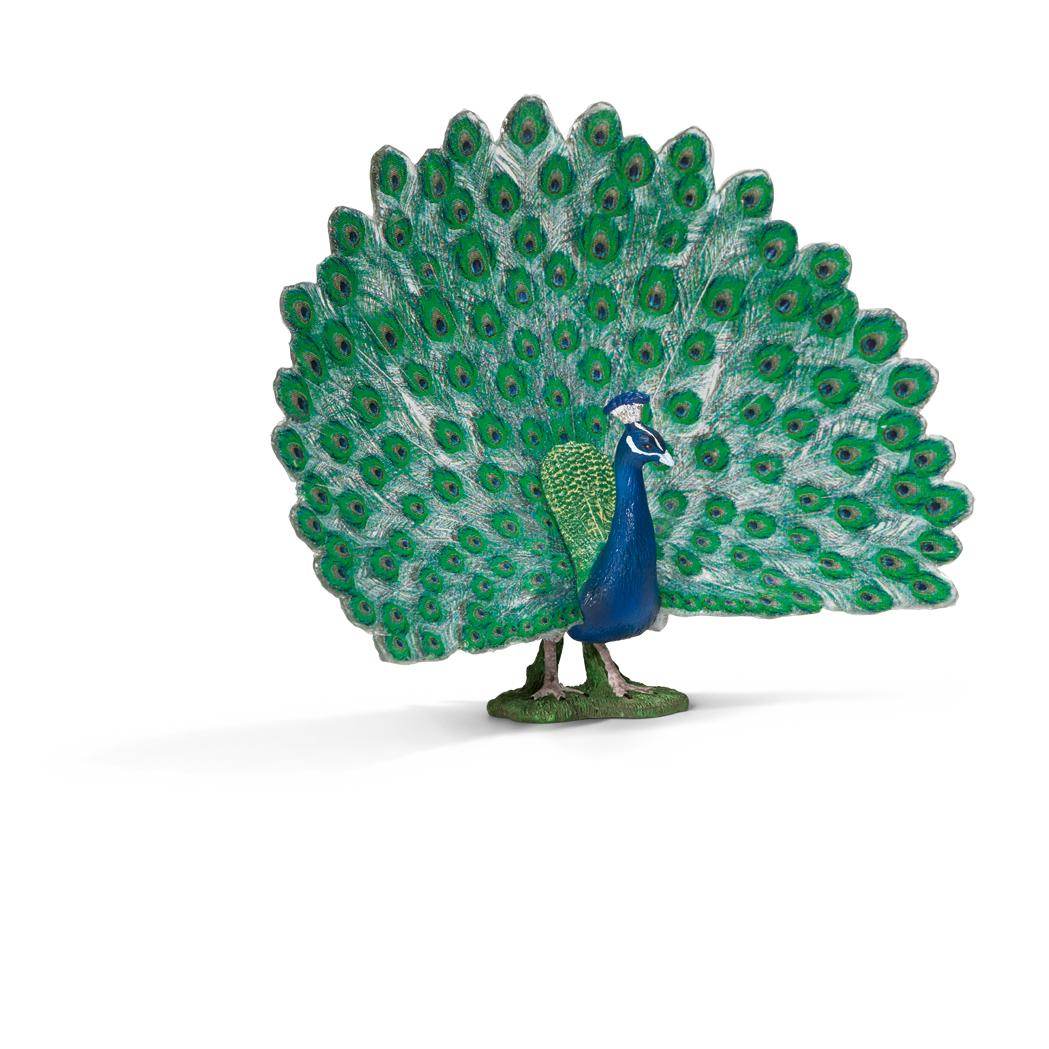 Peafowls are characterized by peacocks and their magnificent plumes