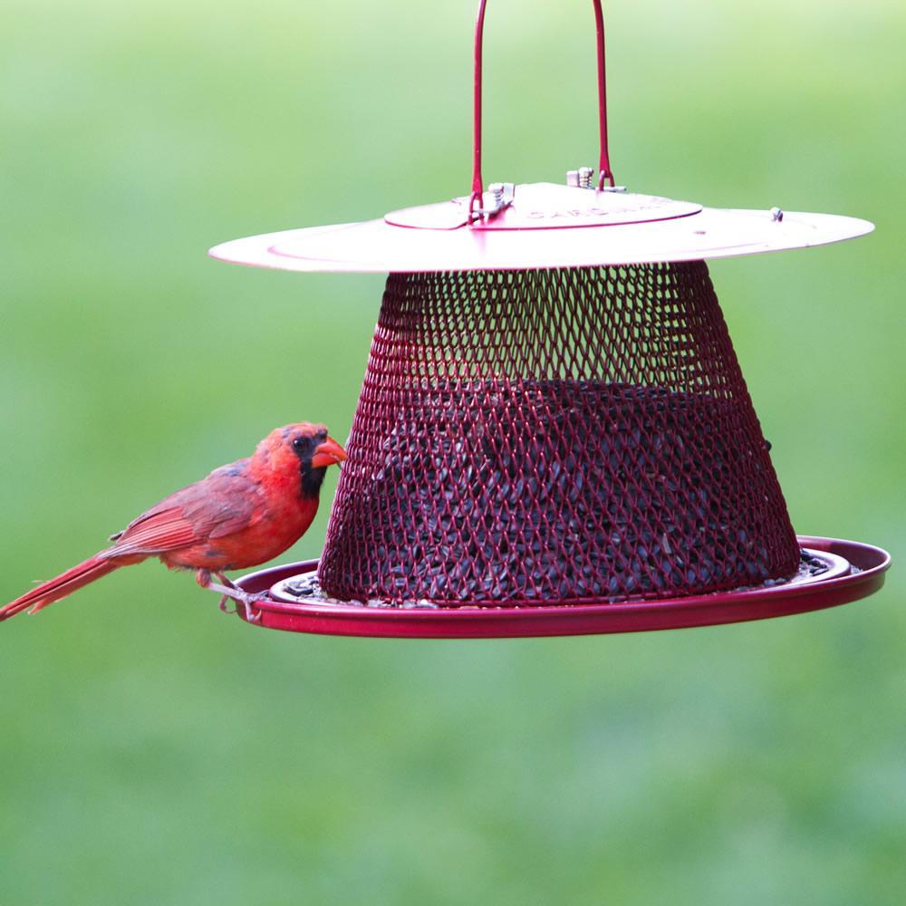 Amazon Com No No Red Cardinal Bird Feeder C00322 Wild