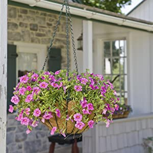 CobraCo 16-Inch Hunter Green Growers Style Hanging Basket