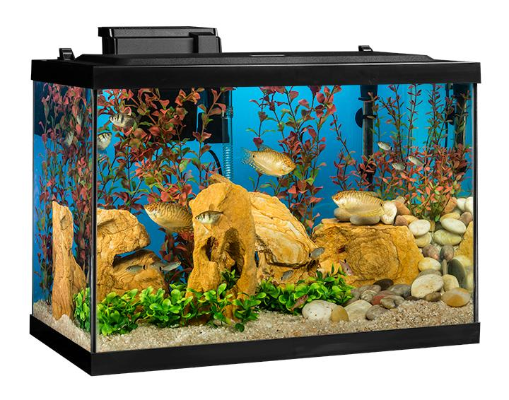 20 gallon aquarium pet supplies plus 2017 fish tank