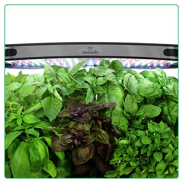 How To Grow Lettuce And Salad Greens Apps Directories