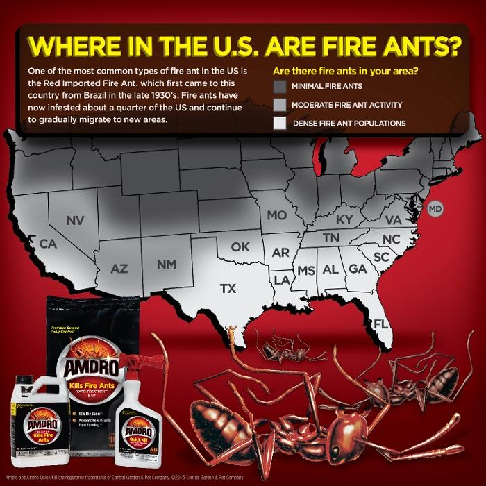 Amazon.com : Amdro Fire Ant Bait Granules 1lb : Home Pest Lures ...