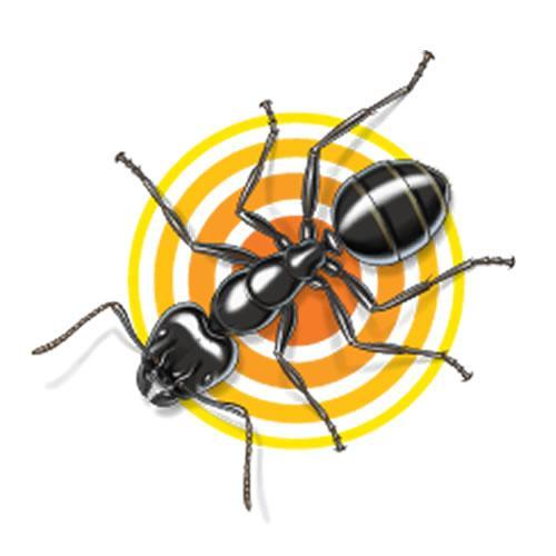 Amazon.com : TERRO Carpenter Ant & Termite Killer Ready-to-Use