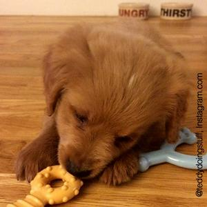 nylabone puppy products, nylabone puppy toys, nylabone puppy chews, puppy products, puppy solutions