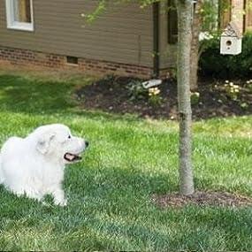 Amazon Com Petsafe Outdoor Ultrasonic Bark Deterrent
