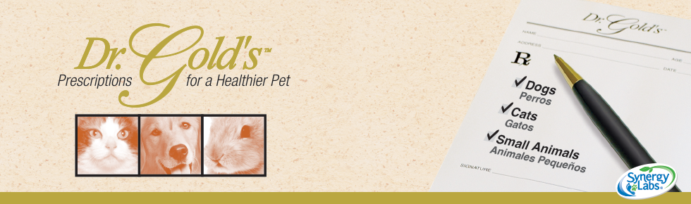 Amazon.com : SynergyLabs Dr. Gold's Ear Therapy; 4 fl. oz. : Pet Ear Care Supplies : Pet Supplies
