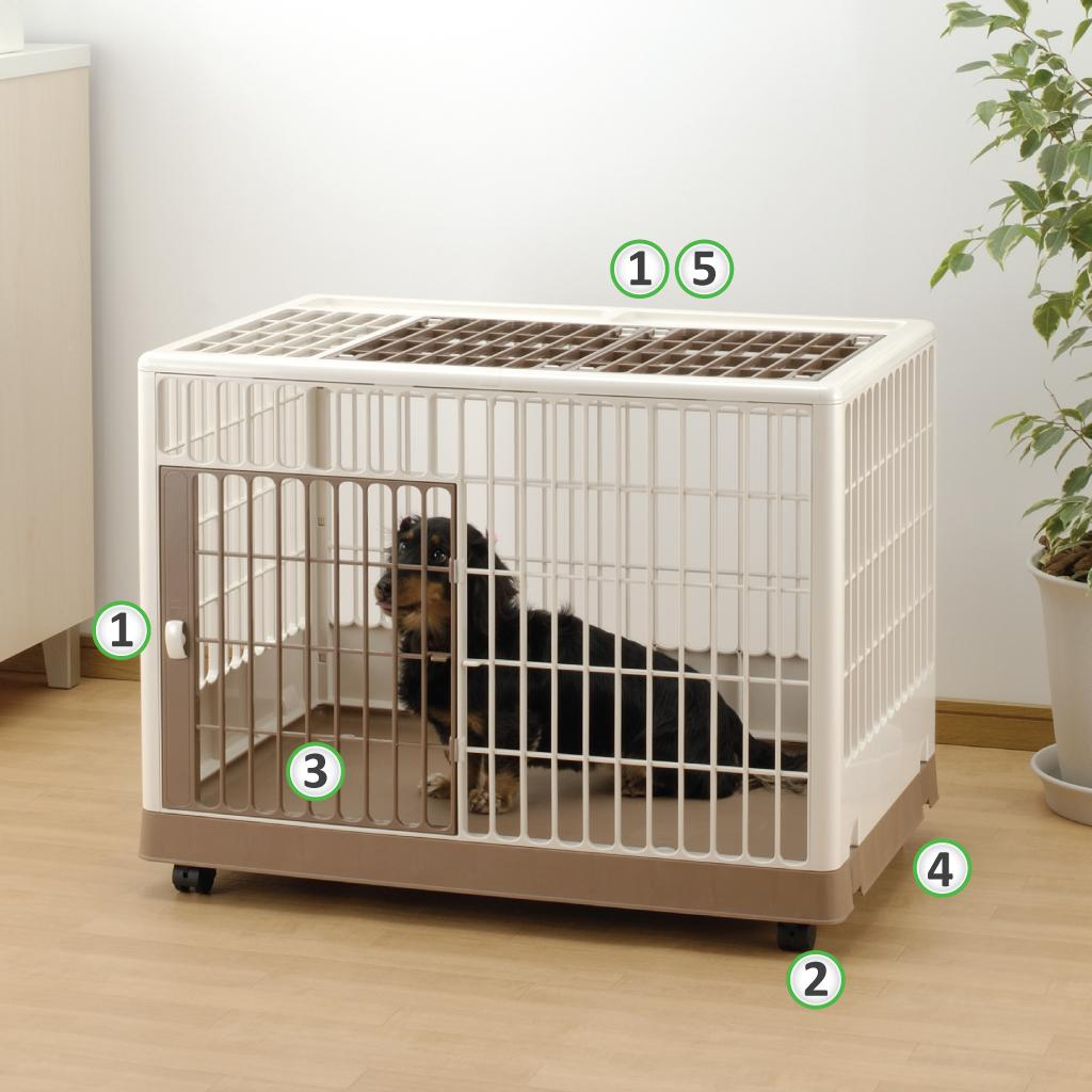 how to kennel potty train a dog