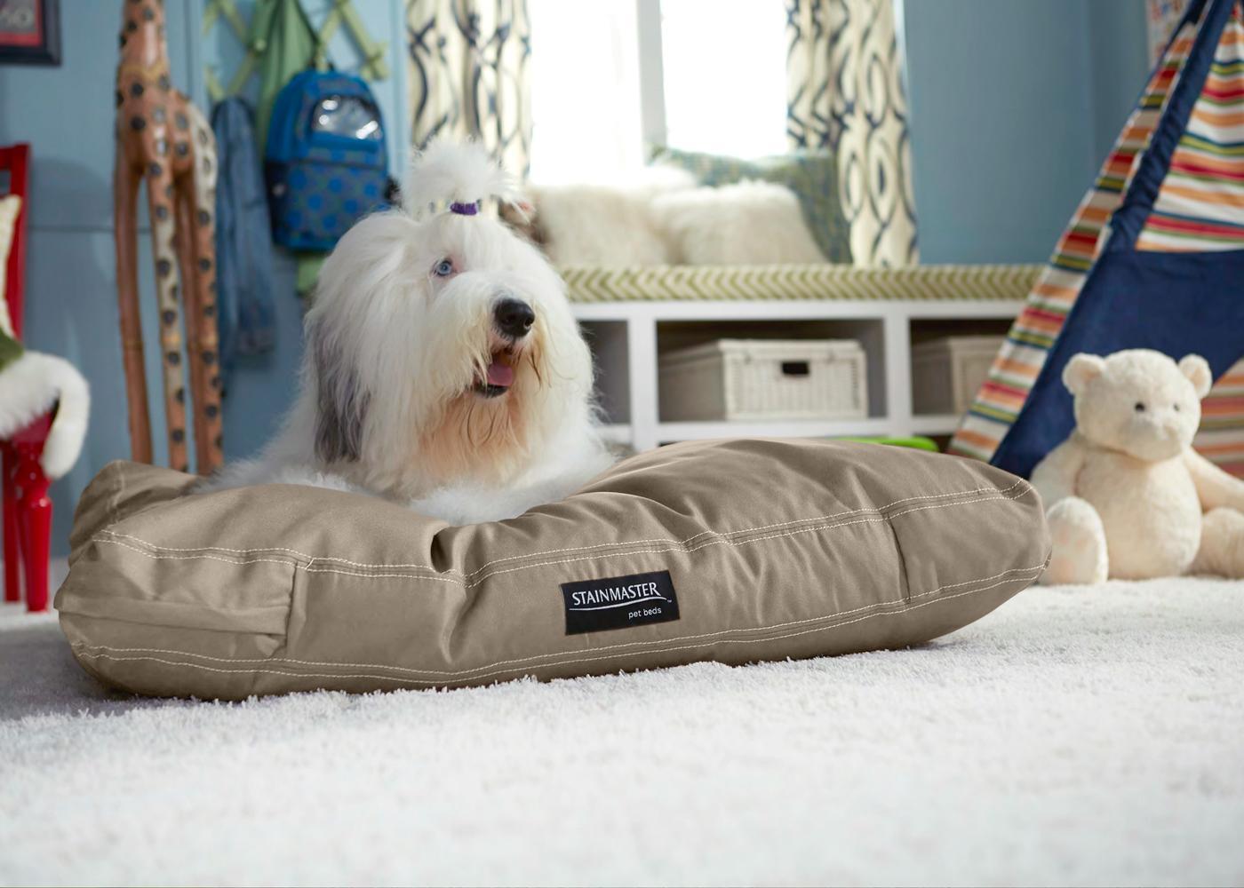 most pet stain resistant carpeting
