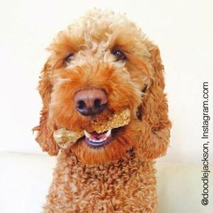 nylabone dental, dog dental products, dog dental health, dog dental toys