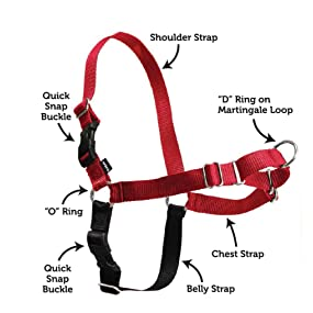 Safe Easy Walk Harness for dogs that pull