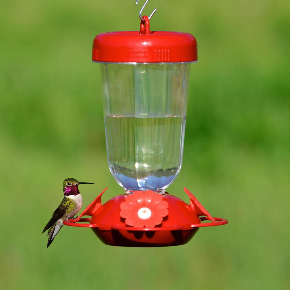When To Put Hummingbird Feeders Out 28 Images Best 28 Where To Put Hummingbird Feeders