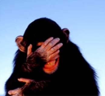 embarrassed-chimpanzee.jpg