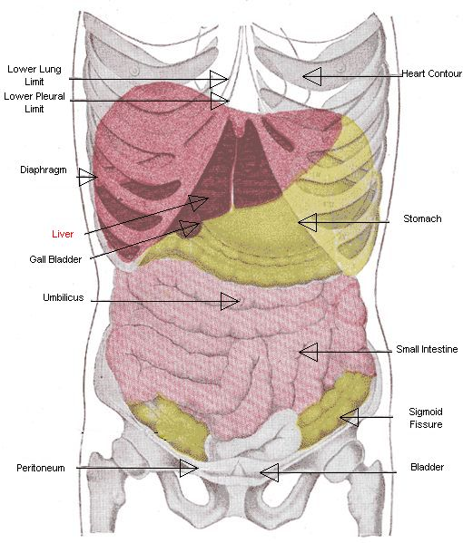 Diagram Of Gallbladder Liver Human Body, Diagram, Get Free ...