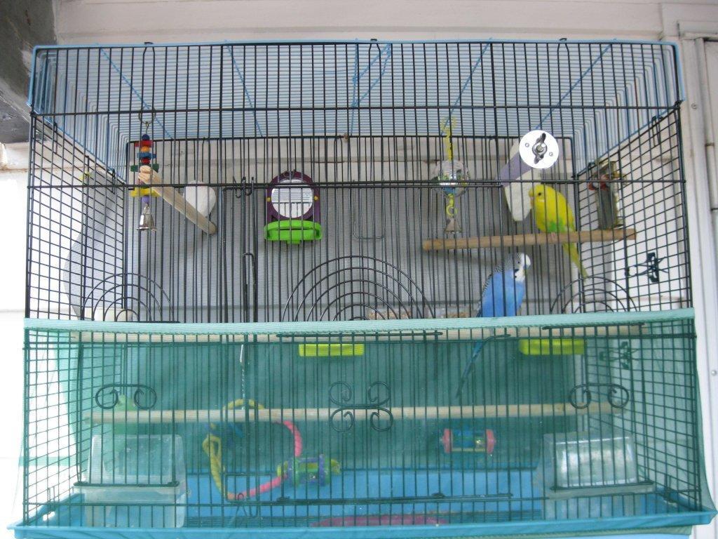 Cage perruche trouvez le meilleur prix sur voir avant d for Ask yourself why la piscine