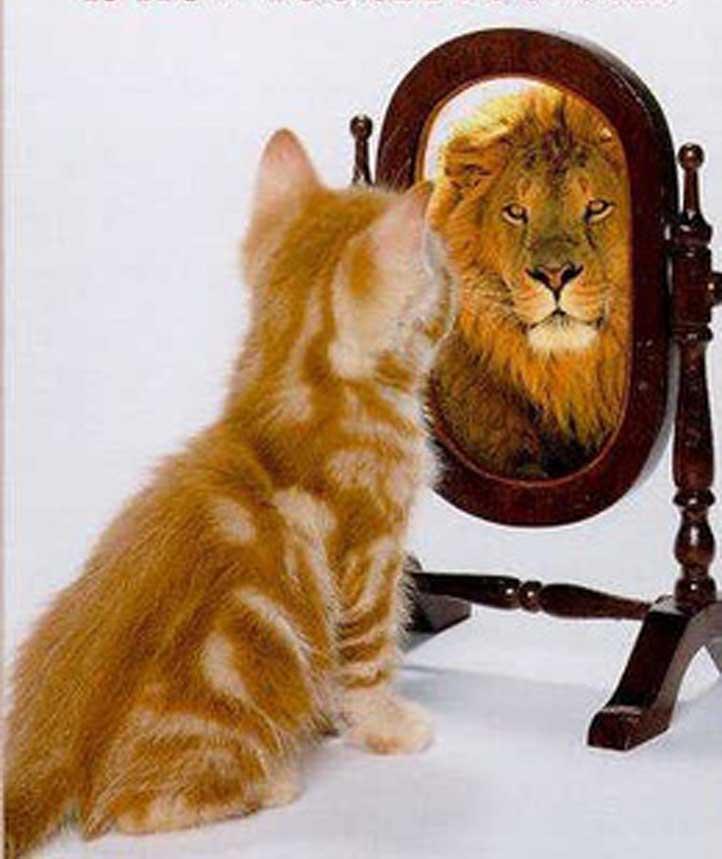 http://g-ecx.images-amazon.com/images/G/01/askville/5880747_9088679_mywrite/kitty.jpg