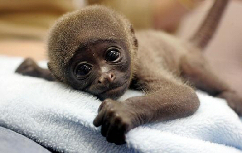 Happy And Cute Animals: Cutest Animals In The World The Cutest Baby Animal In The World