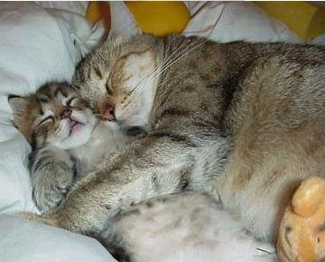 cats_cuddling.jpg